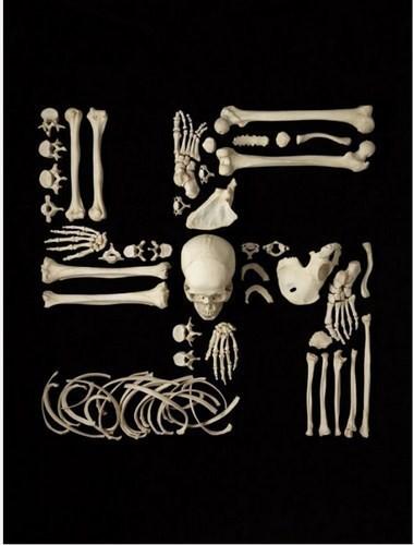 Изображение 1. Череп и кости.. Изображение № 1.