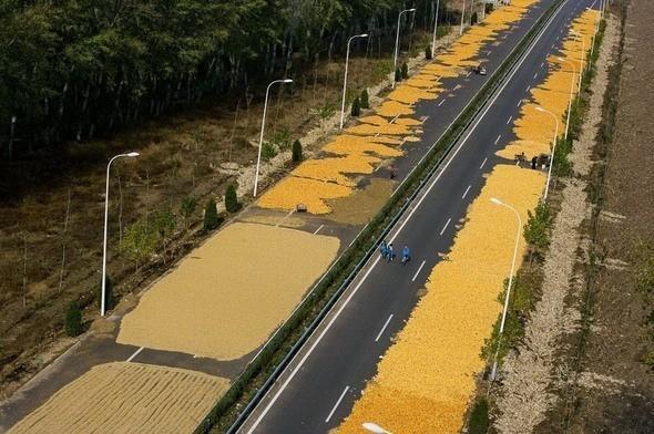Китайцы сушат на трассе в окрестностях Пекина кукурузу . Изображение № 9.