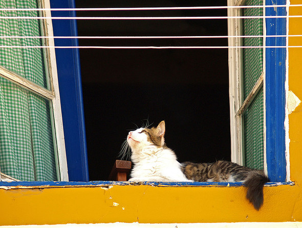 Cat. Window. Изображение № 23.