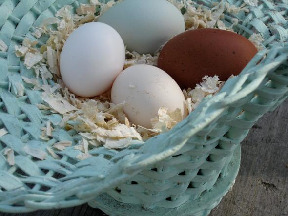 Всемирный день яйца :) Вдохновляемся!. Изображение № 24.