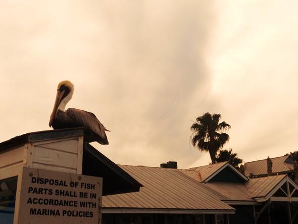Спешите жить медленно. Ки-Уэст (Key West). Изображение № 32.