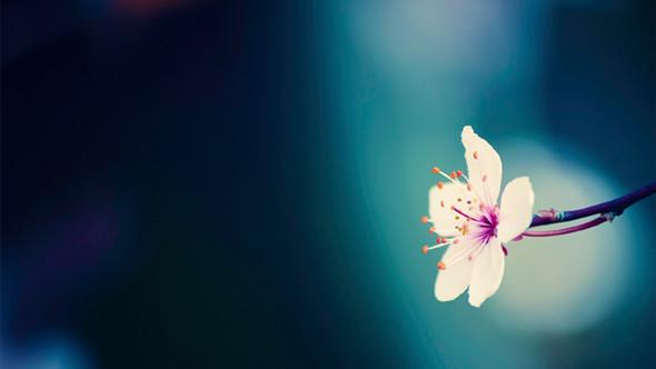 Весна идет! Создаем весеннее настроение. Изображение № 2.