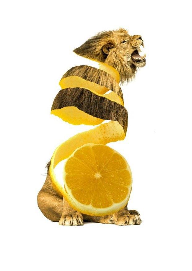 Концепт: животные в виде фруктов. Изображение № 4.