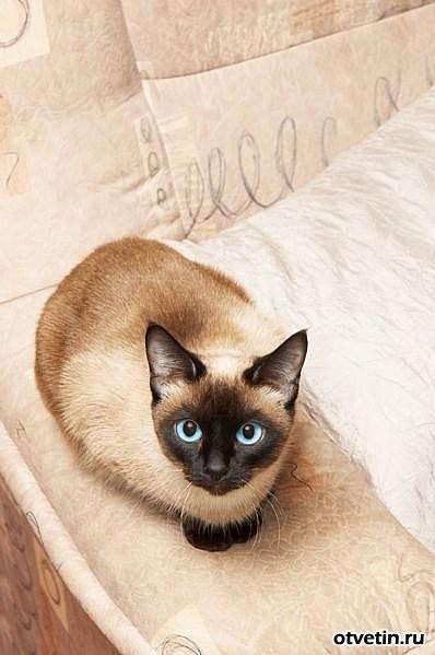Кошки в интерьере. Изображение № 7.