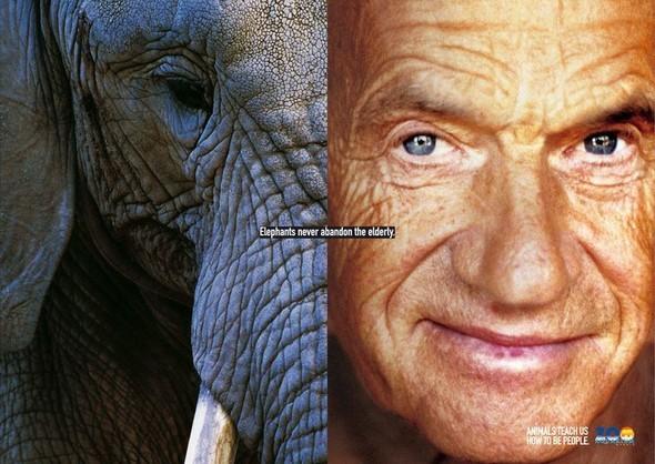 Животные учат нас быть людьми. Изображение № 5.