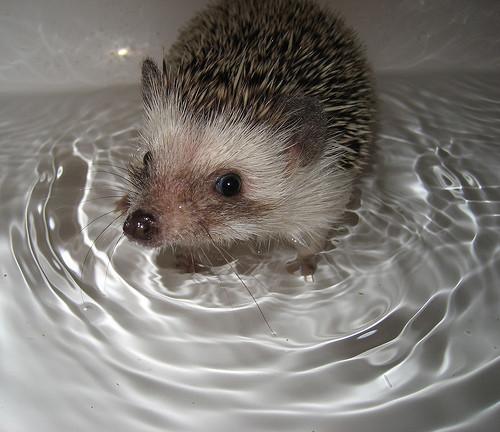 50 животных, которые ненавидят мыться. Изображение № 27.