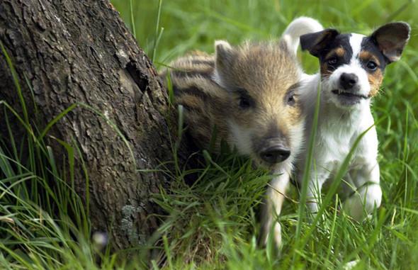 Дружба - она и у животных дружба!. Изображение № 7.