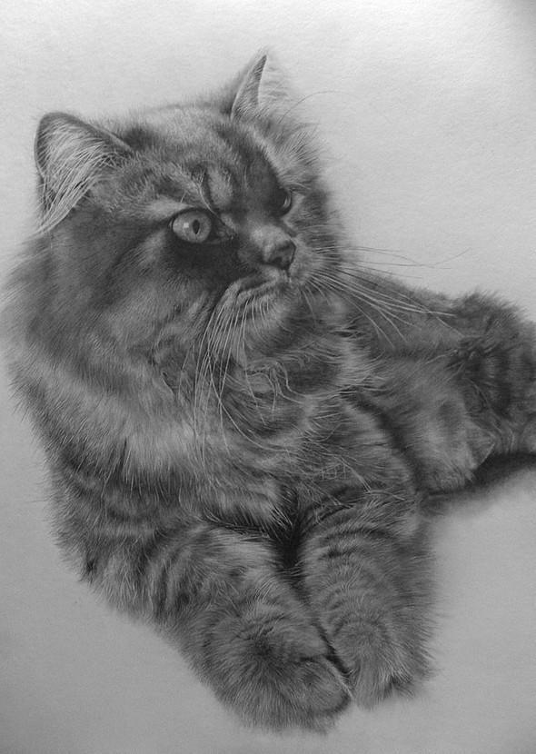 Paullung.и его коты. Изображение № 5.