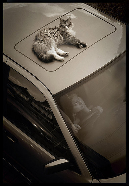 Котики и авто. Изображение № 19.