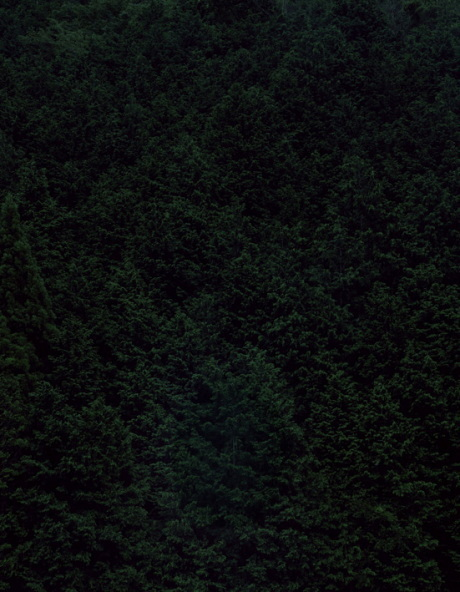 Темный лесКейты Сигиуры. Изображение № 6.