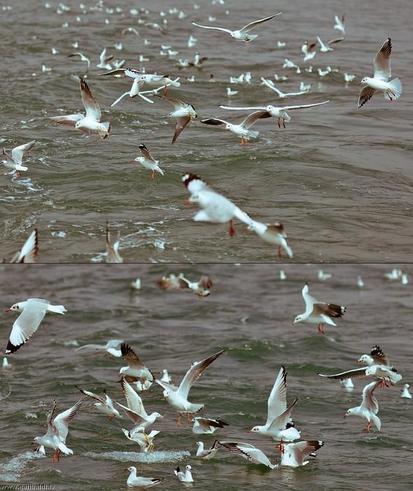 Shrimp boat MFR 646 DF GOA - Non stop. Изображение № 21.