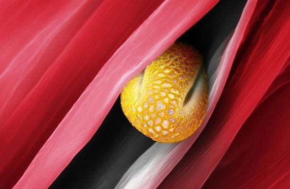 Микроскоп-2: Пыльца. Изображение № 2.