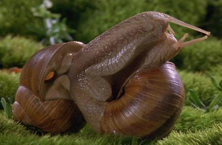 Microcosmos Lepeuple del'herbe (1996). Изображение № 3.