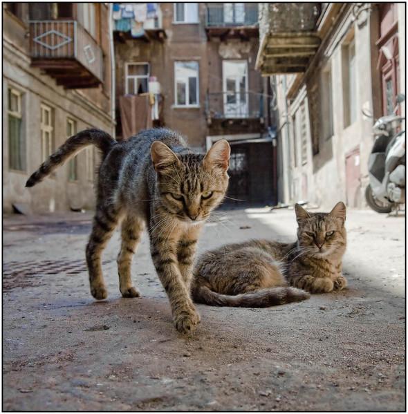 Блудливые коты. Изображение № 16.