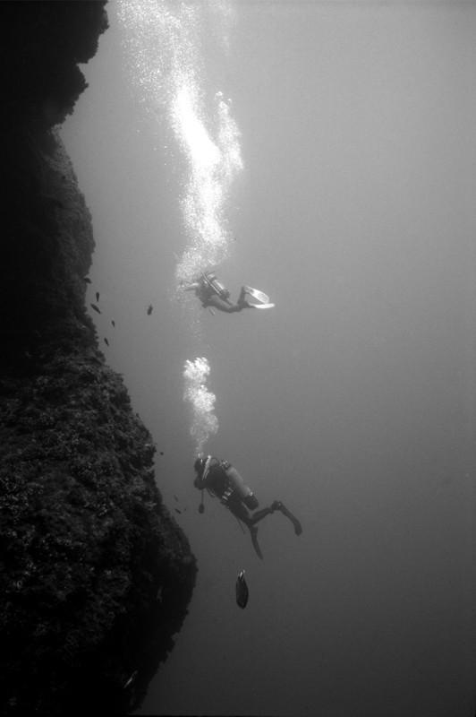 Подводная жизнь глазами фотографа Карлоса Франко. Изображение № 12.