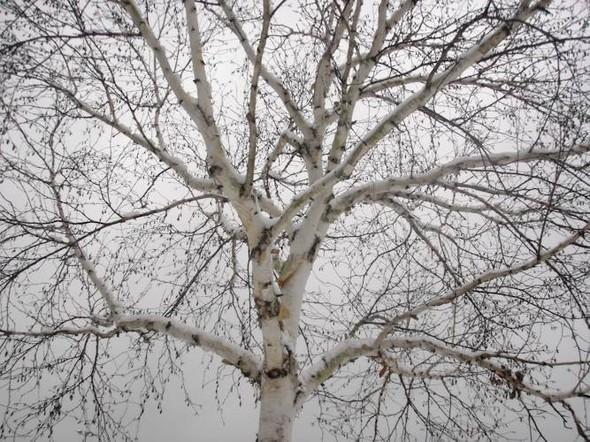 Изображение 2. Магическое шоу в снежном парке.. Изображение № 3.