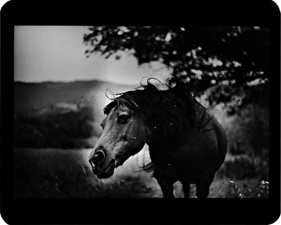 Джакомо Брунелли и«другие» животные. Изображение № 2.
