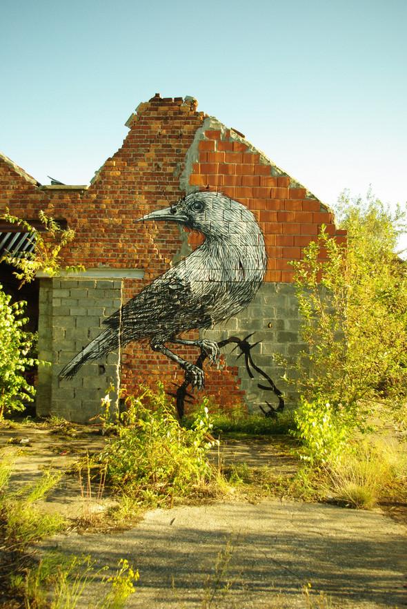 Животный стрит-арт от бельгийского граффитчика ROA. Изображение № 37.