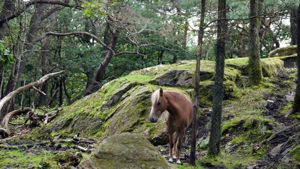 Еще одна резервация, на этот раз с лошадьми. Изображение № 11.
