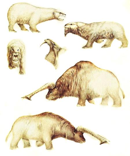Зоология дляпутешественников вовремени. Изображение № 7.