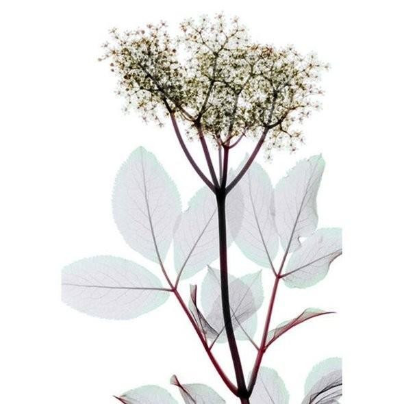 Изображение 6. Цветы под рентгеном.. Изображение № 6.