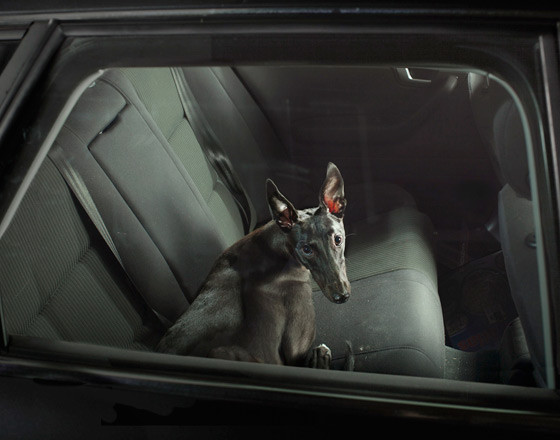 The silence of dogs in cars. Изображение № 12.