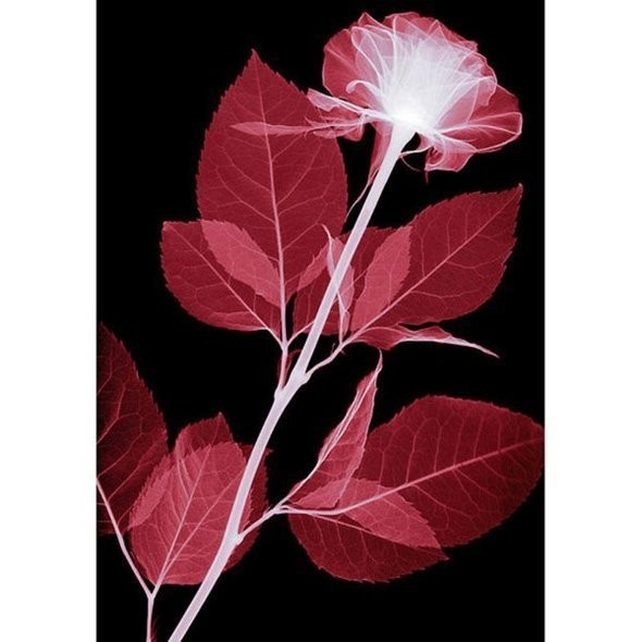 Изображение 7. Цветы под рентгеном.. Изображение № 7.