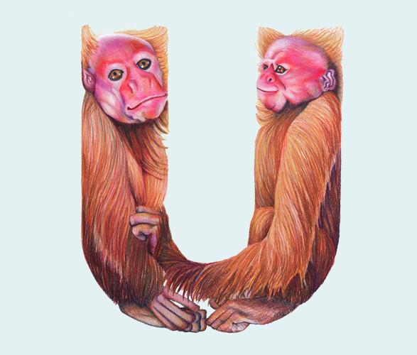 Животный алфавит. Изображение № 14.