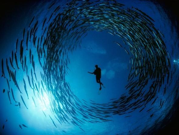 Лучшие снимки от National Geographic (золотой фонд). Изображение № 20.