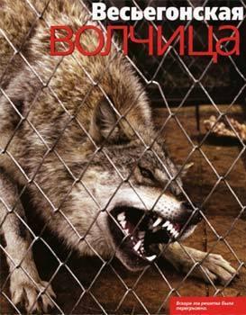 Весьегонская волчица (2004). Изображение № 1.