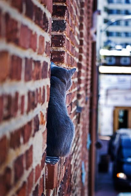 Cat. Window. Изображение № 28.