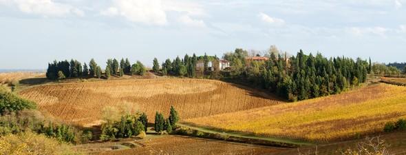 Вино от Baldinini & Cevico (Tenuta Masselina). Изображение № 2.