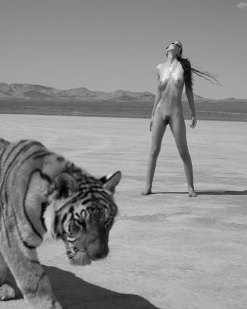 Sylvie Blum BigCats. Изображение № 14.