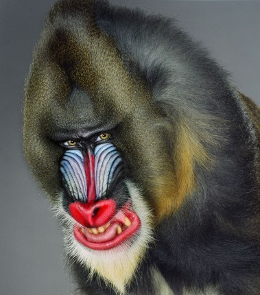 "Jill Greenberg ""Monkey portraits"". Изображение № 34."