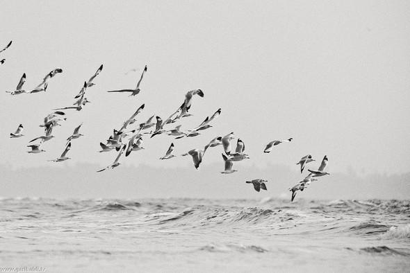 Пронзаясь махом крыльев - non stop. Изображение № 13.