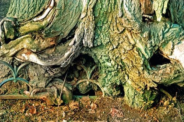 Treefilia. Изображение № 5.