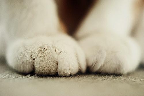 Фотографии животных. Изображение № 10.