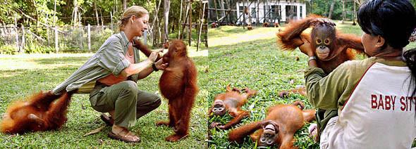 Лоун Дрошер-Нилсен и её обезьянки. Изображение № 2.