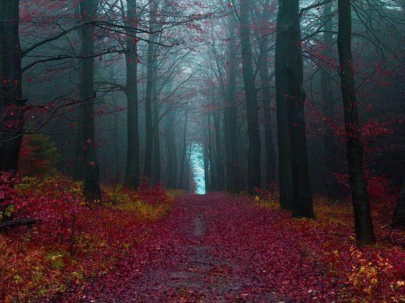 Autumn Woods, Germany. Изображение № 6.