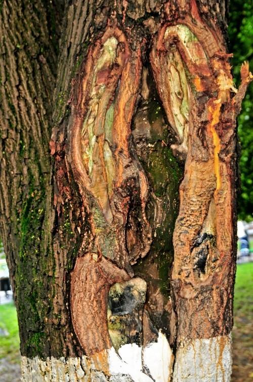 Treefilia. Изображение № 11.