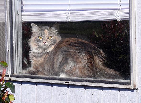Cat. Window. Изображение № 26.