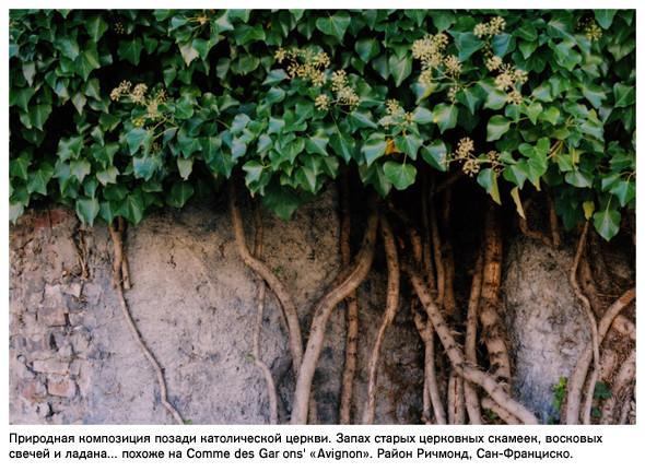 Фотограф – Ноэль Люсано. Изображение № 3.
