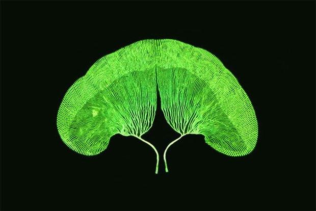 Что не видит глаз: Лучшие микроскопические фотографии этого года. Изображение № 11.