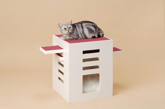 Кошачье дерево. Изображение № 3.