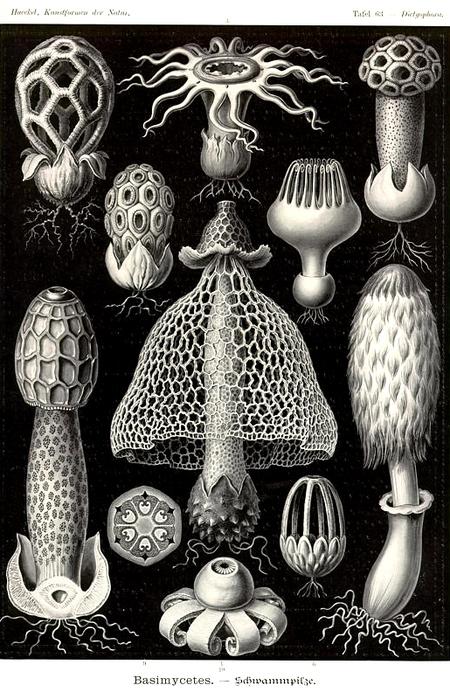Причудливые формы природы. Изображение № 26.