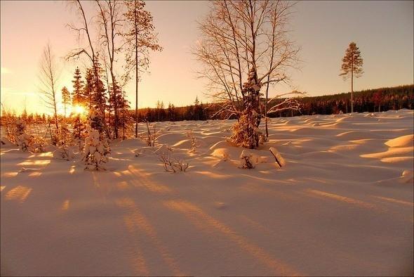 Изображение 36. Выходные в шведском лесу.. Изображение № 36.
