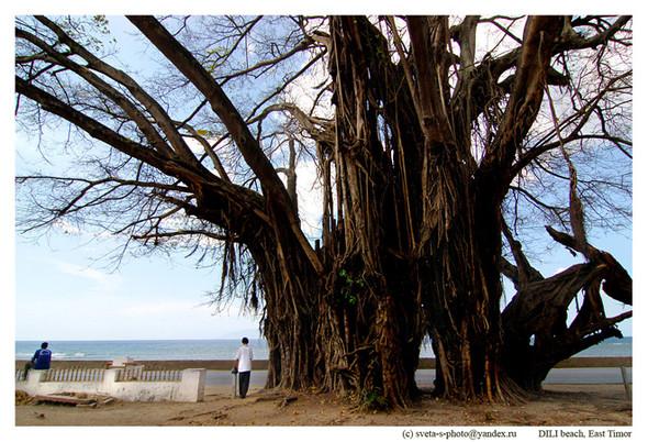 Восточный Тимор. Изображение № 3.