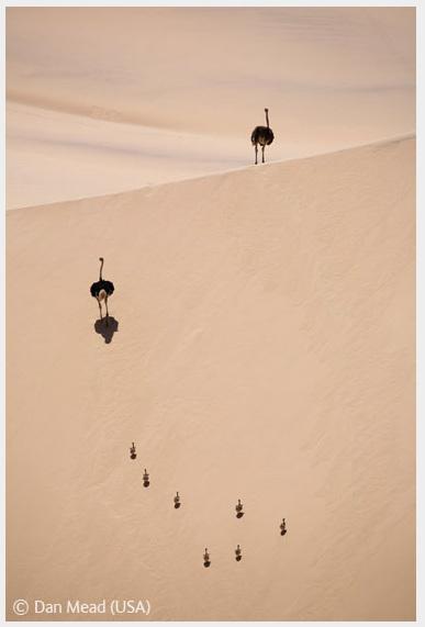Победители Wildlife Photographer 2008. Изображение № 59.