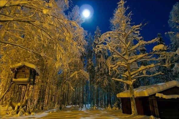 Изображение 2. Выходные в шведском лесу.. Изображение № 2.