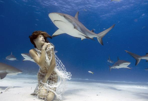 Todd Essick. Подводный мир. Изображение № 16.